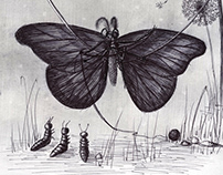 Butterfly Grandmother