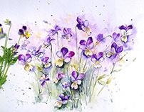 Garden watercolor.Part 1.Viola Tricolor