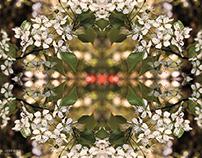 Spring Time Kaleidoscope