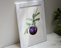 Watercolor Plum - Time Lapse Painting