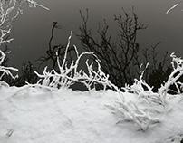 Orange Reservoir, West Orange NJ