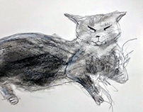 Drawing - Cat 2