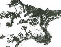 5º Prêmio Ibema Gravura: cabeça de cachorro violentado