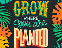 Grow where you are planted Lettering