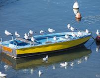 the seagulls boat