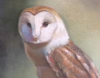 Wildlife Artwork, 2014 to present