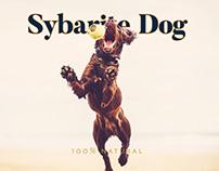 Sybarite Dog
