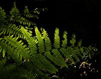 Fern illuminations
