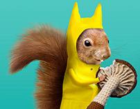 The Squirrel likes Mushroom