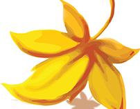 Ochre Logo Concepts