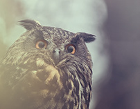 Eurasian Eagle-Owl PART I.