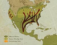 Monarch Summer Migration