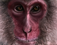 A New World for an Old World Monkey