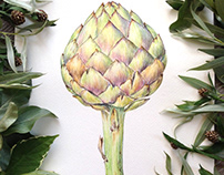 Botanical watercolor of Artichoke