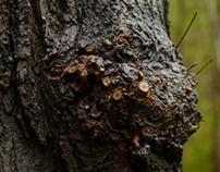 Photogrammetry - tree 002