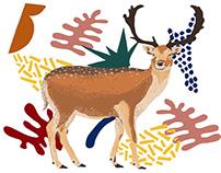 deer | Illustration