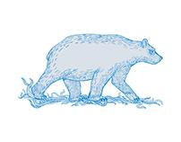 Polar Bear Walking Side Drawing