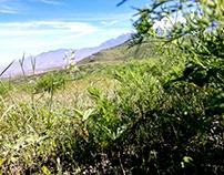 Misti Arequipa