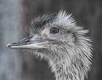 _zoo _birds