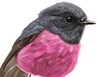 Cute Little Birds - Part One