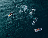 Whales from above, 2017