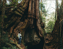 Big tree - 大樹