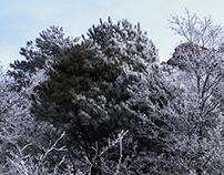 alberi d'inverno IV