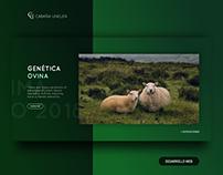 Cabaña Unelen | Web Design | UX/UI