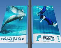Discover Crystal River, FL logo design & advertising