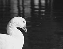 Natureza em preto e branco.
