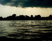 Strays, storm