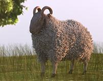 ِal adha Sheep