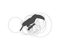 Toucan Logo Design With Golden Ratio
