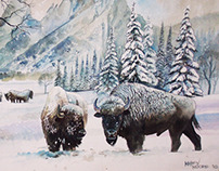 Bison in Winter Setting - Watercolor on paper