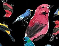 Ilustração Pássaros