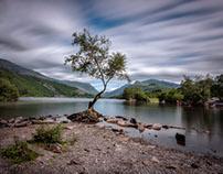 Llyn Padarn's lonely tree