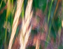 meadows 2