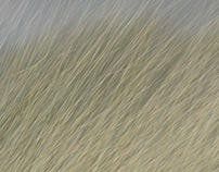 Dunegrass, take a closer look.