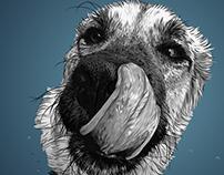 #39: A Cool Dog