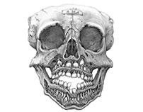 A18. 4 - Child's Skull
