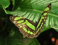 Fotografías de mariposas