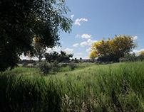 Tabebuia Park