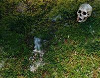 Lost Skull