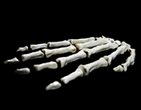 Ceramic Anatomy
