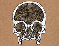 SKULL CROSS SECTION