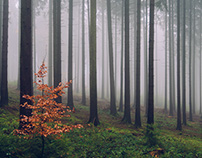 MYSTIC FOREST – Germany