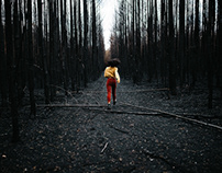In a burned forest with Belle