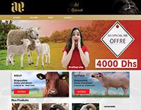 Aid Web Site Design