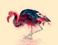 Born Flamingo
