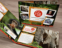 Volunteering Design for Jane Goodall Fundation